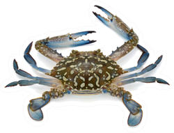 Fresh Crab In Blue Isolated On White Sticker