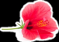 Fresh Hibiscus Flower Sticker
