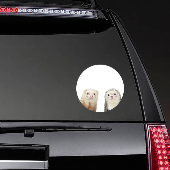 Two Ferrets Close-up Portrait Sticker
