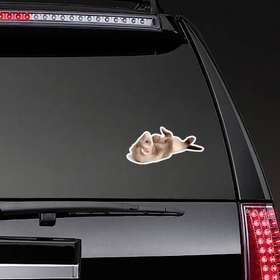 Little Ferret Puppy Lying On Back Sticker