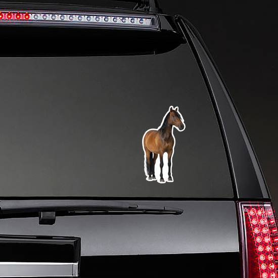 Mixed Breed Of Spanish And Arabian Horse Standing Sticker