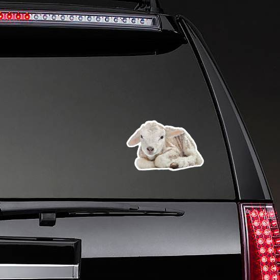 One Day Old Lamb Laying Sticker