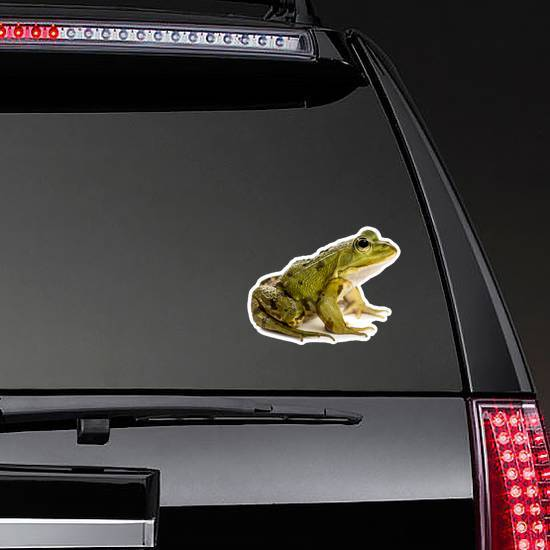 Common Water Frog In Front Of A White Sticker
