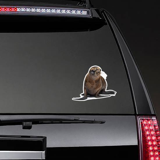 Young California Sea Lion Moving Sticker