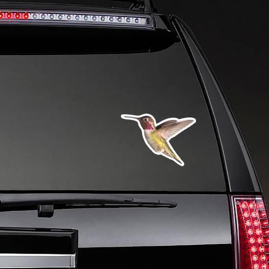 Annas Hummingbird In Flight Illustration Sticker example