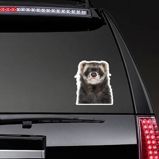 Close-up Of A Ferret Sticker