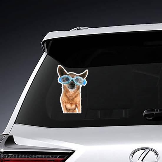 A Chihuahua Wearing Goggles Swim Sticker
