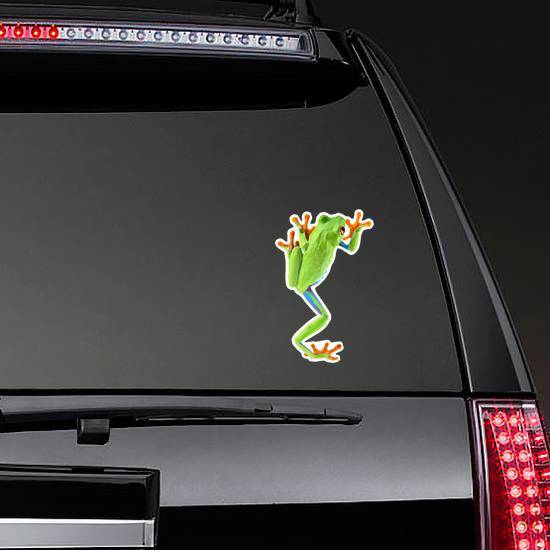 Red Eyed Tree Frog From Tropical Rainforest Sticker
