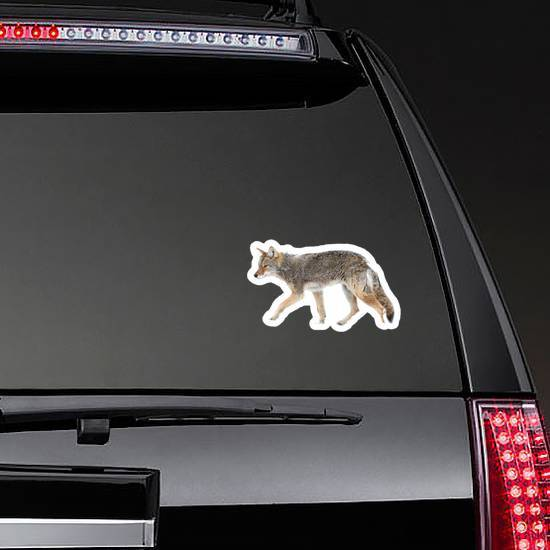 A Lone Coyote Sticker example