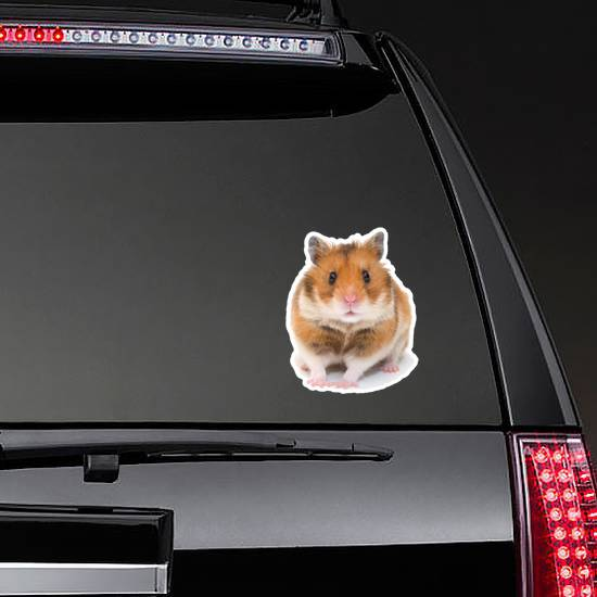 Cute Funny Syrian Hamster Sticker