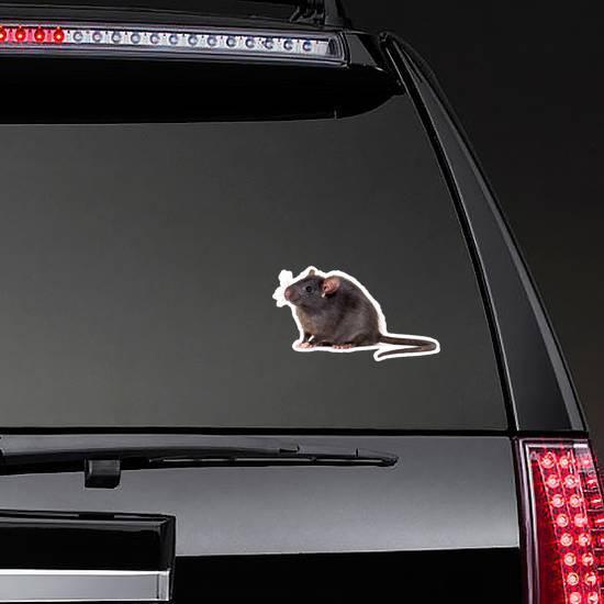 Black Rat Sticker