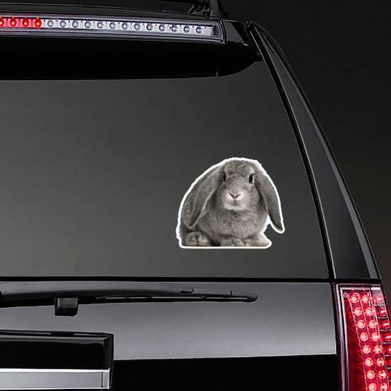 French Lop Rabbit, 2 Months Old Sticker