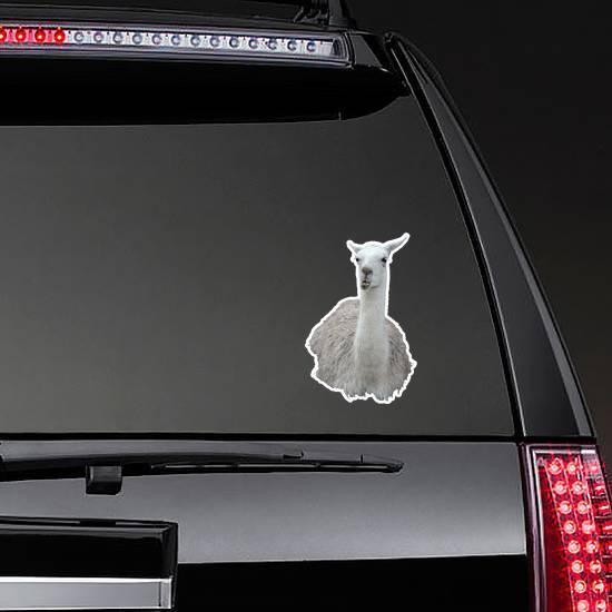 Llama Isolated On White Sticker