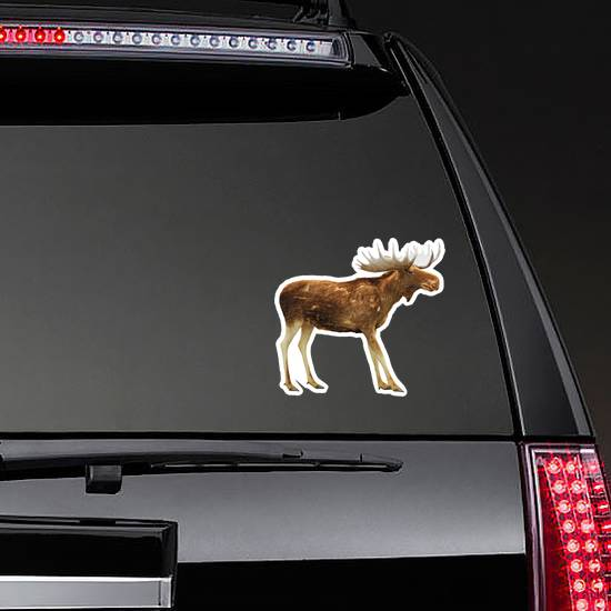 Moose Isolated On White Sticker
