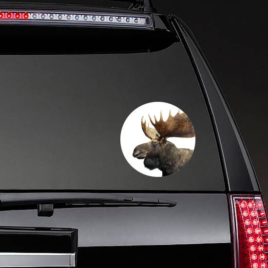 Moose With Huge Antlers Isolated On White Sticker