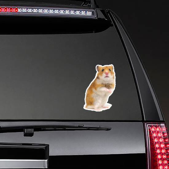 Orange Hamster Standing On Its Hind Legs Sticker