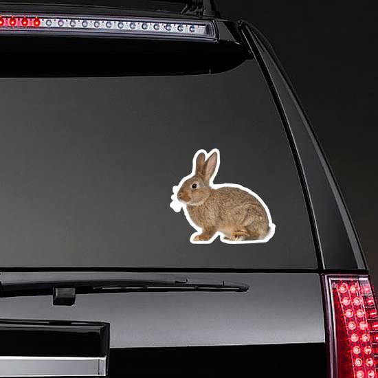Rabbit Sitting Against White Sticker