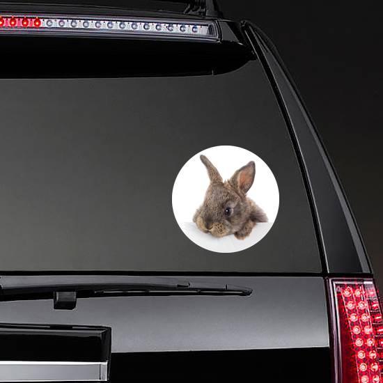 Rabbit With Blank Billboard Sticker