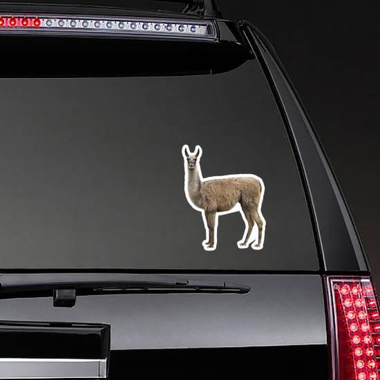 Realistic Llama Isolated On White Sticker