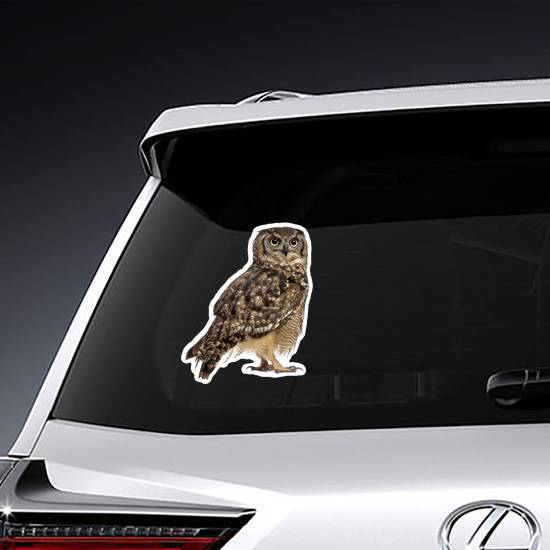 Spotted Eagle Owl Sticker