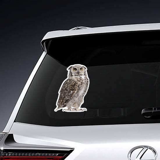 Staring Great Horned Owl Sticker