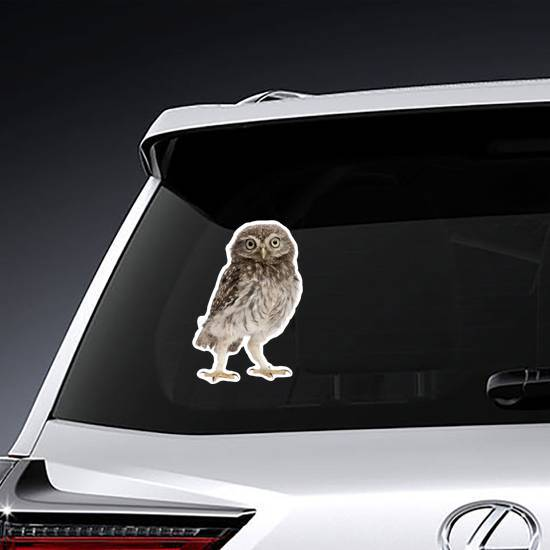 Young Owl Standing Sticker