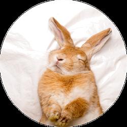 Funny Rabbit Sleeps On White Blanket Sticker