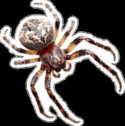 Garden Spider Sticker