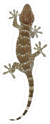 Gecko Crawling Around Sticker