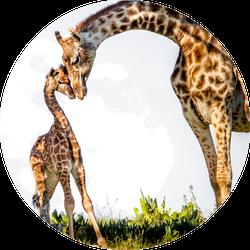 Gentle Moment Between A Mother Giraffe And Her Baby Sticker