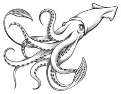 Giant Squid Drawn In Engraving Tattoo Style Sticker
