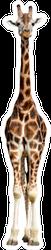 Giraffe Standing Tall Sticker