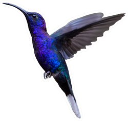 Glittering Blue Hummingbird Sticker