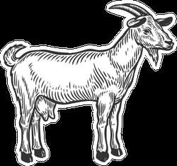 Goat Farm Animal Livestock Hand Drawn Sketch Sticker