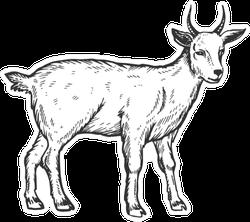 Goat Farm Animal Scratch Sketch Sticker