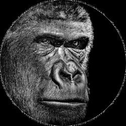 Gorilla Portrait On Black Sticker
