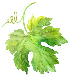Grape Leaf Of Vine With Swirl Watercolor Sticker