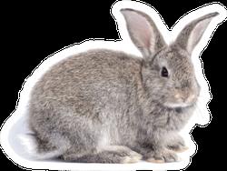 Gray Cute Rabbit Sitting Isolated Sticker