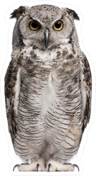 Great Horned Owl Sticker