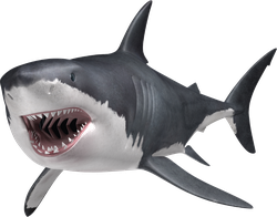 Great White Shark Swimming With Mouth Open Sticker