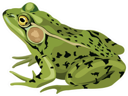 Green Frog Drawing Sticker