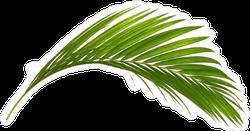 Green Leaf Of Palm Tree Sticker