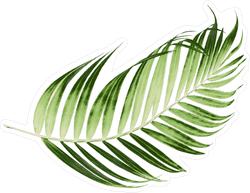 Green Leaves Of Palm Tree Sticker