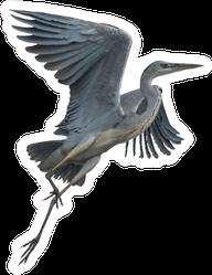 Grey Heron Crane Flying Isolated On White Background Sticker