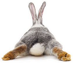 Grey Rabbit Behind Sticker