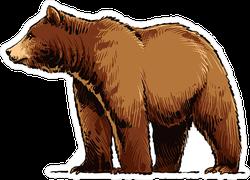 Grizzly Bear Illustration Sticker