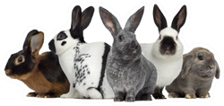 Group Of Rabbits, Isolated On White Sticker