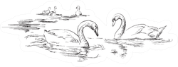Group Of Swans Swimming In Water Realistic Sticker