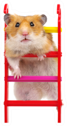 Hamster On The Toy Stairs Sticker