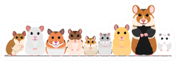 Hamsters In A Row Sticker